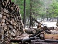 Sustainable forestry offers chances for climate protection.